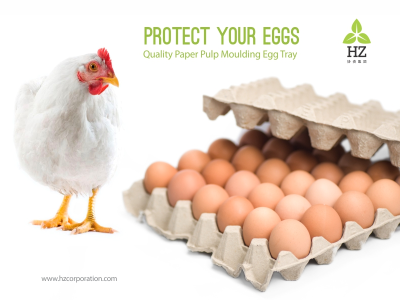 Quality Paper Pulp Moulding Egg Tray